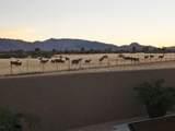 11050 Cowboy Trail - Photo 25