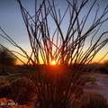 7129 Hibiscus Way - Photo 30