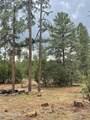 2724 Black Bear Trail - Photo 15