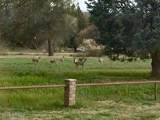 4255 Beaver Vista Road - Photo 26