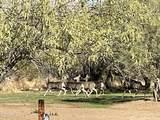 44028 Spur Cross Road - Photo 51