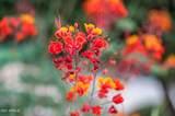 12923 Chapala Drive - Photo 79