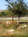 220 Bonito Ranch Loop - Photo 8