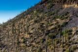 8545 Sierra Vista Drive - Photo 44