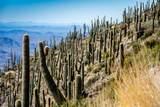8545 Sierra Vista Drive - Photo 12