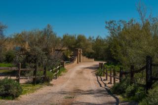 5107 E Calle De Los Flores, Cave Creek, AZ 85331 (MLS #5579232) :: Sibbach Team - Realty One Group