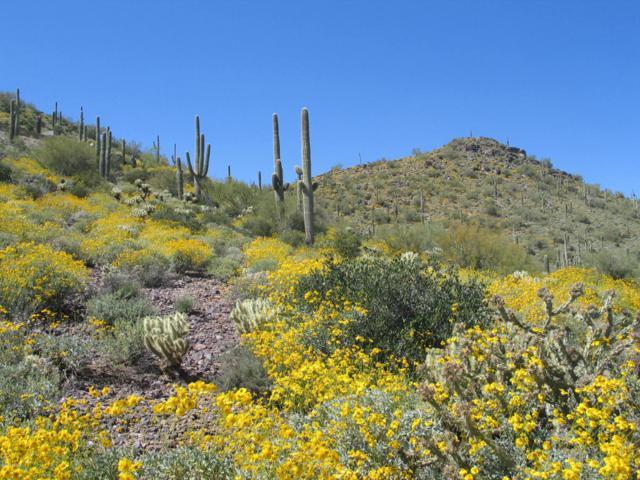 00000 E Lone Mountain Road, Cave Creek, AZ 85331 (MLS #5138595) :: The Laughton Team