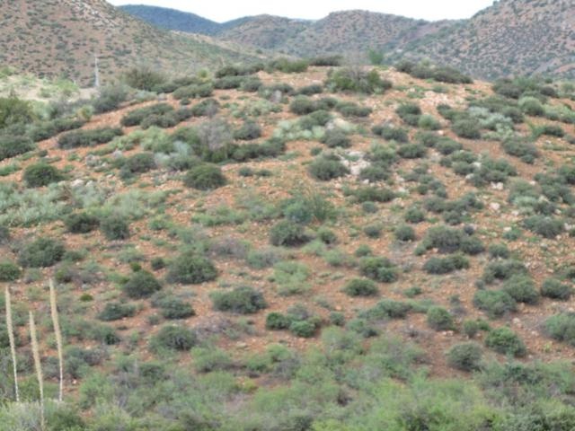 lot 143 Over Hill Road, Globe, AZ 85502 (MLS #5160548) :: The Garcia Group @ My Home Group