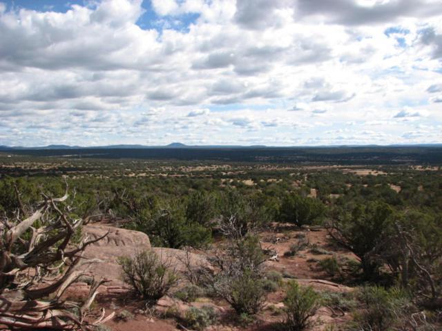 9554 Blue Bell Lane, White Mountain Lake, AZ 85912 (MLS #5460606) :: Relevate | Phoenix