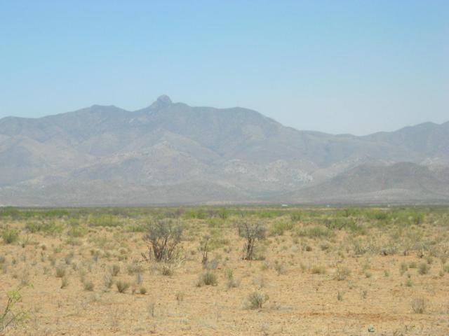 0 E Arzberger Road, Willcox, AZ 85643 (MLS #5556822) :: Brett Tanner Home Selling Team