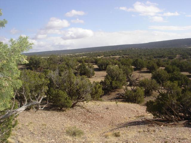 4423 Stirrup Road, Snowflake, AZ 85937 (MLS #5592384) :: Brett Tanner Home Selling Team