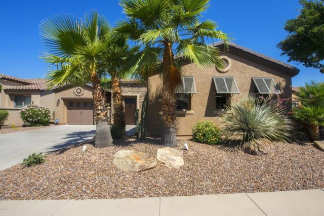 12388 W Roberta Lane, Peoria, AZ 85383 (MLS #5615789) :: Desert Home Premier