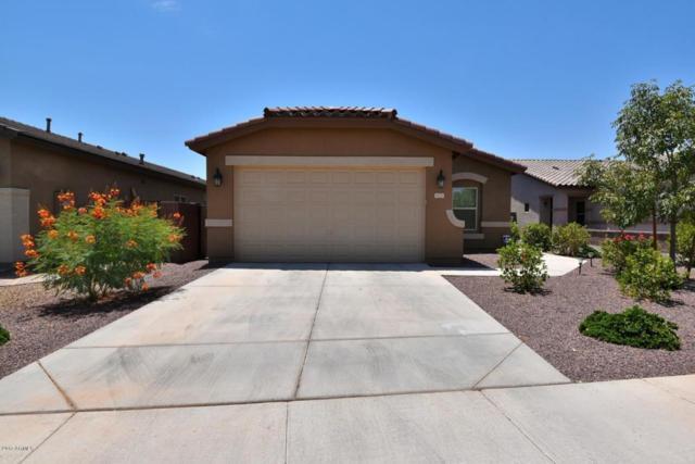 1173 W Popcorn Tree Avenue, San Tan Valley, AZ 85140 (MLS #5635408) :: The Daniel Montez Real Estate Group