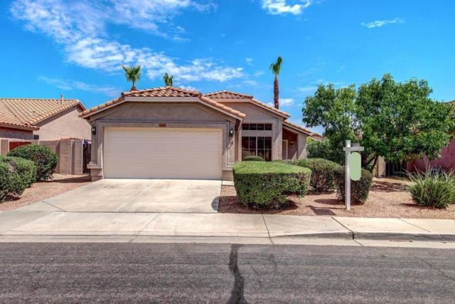 1278 W Lark Drive, Chandler, AZ 85286 (MLS #5635819) :: Lux Home Group at  Keller Williams Realty Phoenix