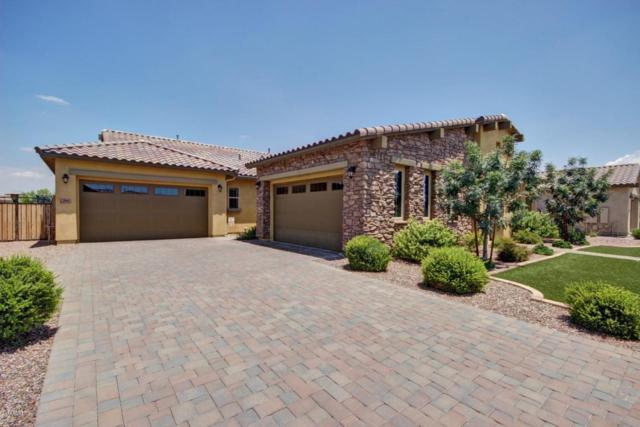 2962 E Athena Avenue, Gilbert, AZ 85297 (MLS #5637276) :: Occasio Realty