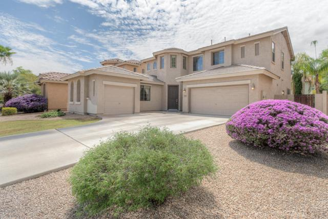 153 W Raven Drive, Chandler, AZ 85286 (MLS #5647664) :: Kelly Cook Real Estate Group