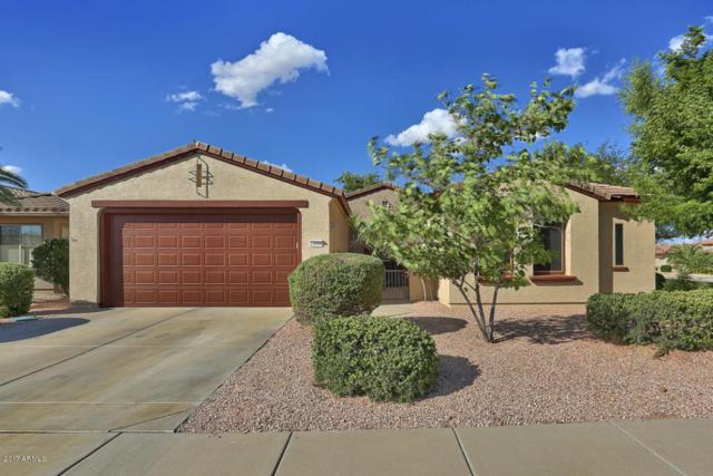 16538 W Torrance Lane, Surprise, AZ 85387 (MLS #5661825) :: Desert Home Premier