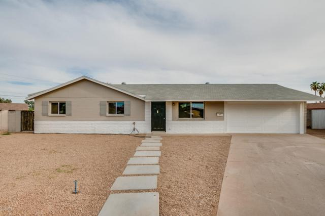 3331 S Shafer Drive, Tempe, AZ 85282 (MLS #5676609) :: Group 46:10