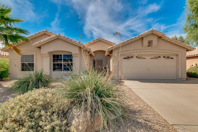 6413 W Irma Lane, Glendale, AZ 85308 (MLS #5676855) :: The Laughton Team
