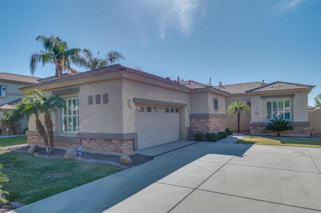 263 W Pelican Drive, Chandler, AZ 85286 (MLS #5677480) :: Occasio Realty