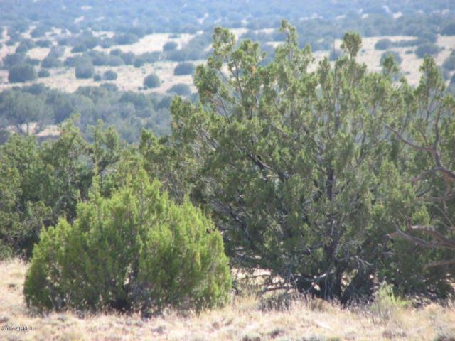 Lot 290 Chevelon Canyon Ranch #3, Overgaard, AZ 85933 (MLS #5680457) :: The Wehner Group