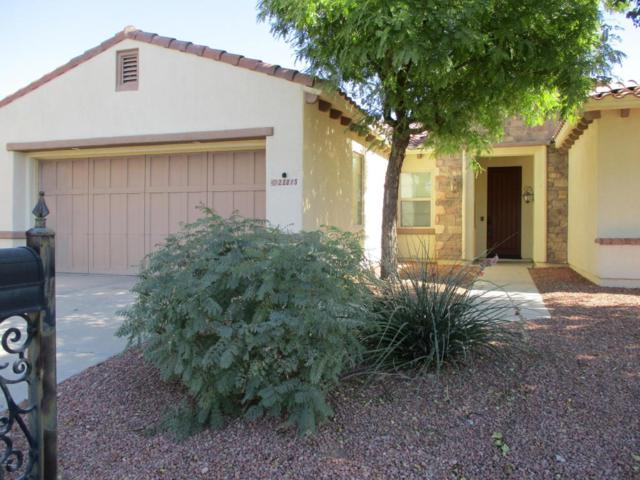 22815 N Arrellaga Drive, Sun City West, AZ 85375 (MLS #5680704) :: Desert Home Premier