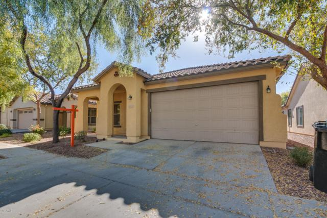 4053 E Cathy Drive, Gilbert, AZ 85296 (MLS #5691289) :: The Everest Team at My Home Group