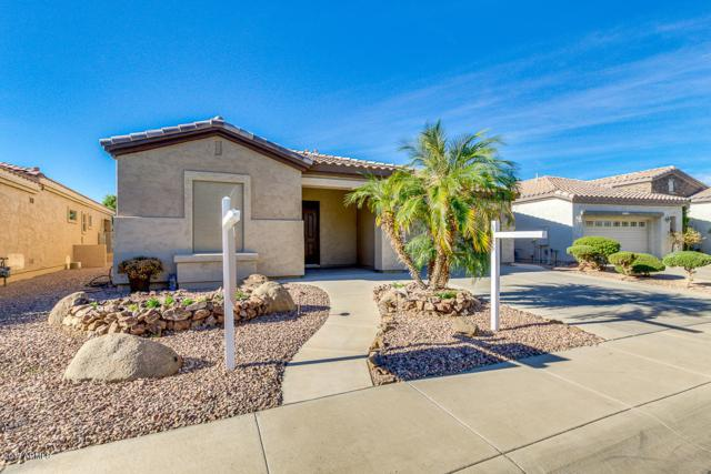 5316 S Citrus Court, Gilbert, AZ 85298 (MLS #5695648) :: Yost Realty Group at RE/MAX Casa Grande