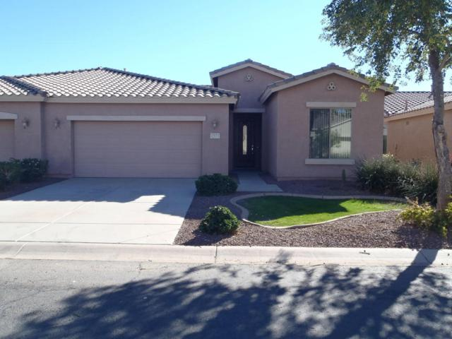 42033 W Dorsey Drive, Maricopa, AZ 85138 (MLS #5696995) :: Yost Realty Group at RE/MAX Casa Grande