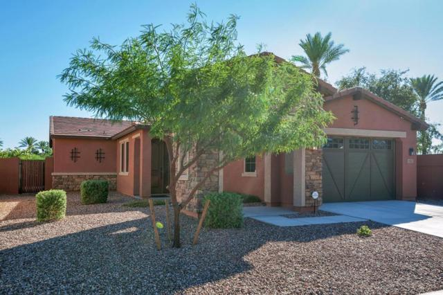 9381 W Aster Drive, Peoria, AZ 85381 (MLS #5697598) :: Occasio Realty