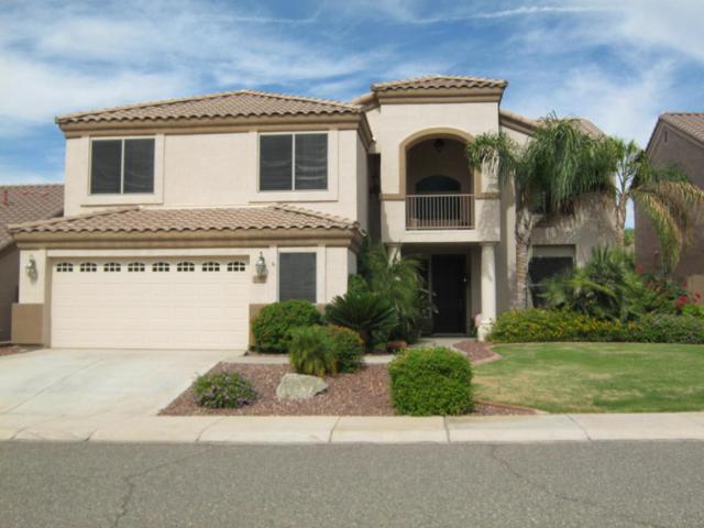 6342 W Hackamore Drive, Phoenix, AZ 85083 (MLS #5704528) :: Occasio Realty