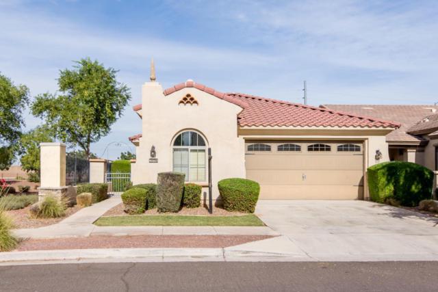 3278 E Windsor Drive, Gilbert, AZ 85296 (MLS #5705968) :: Yost Realty Group at RE/MAX Casa Grande