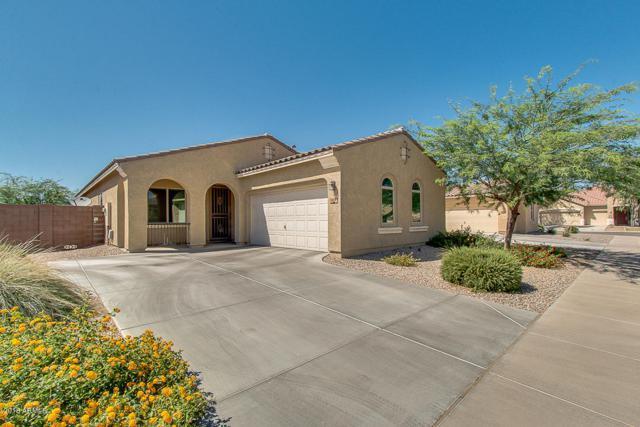 878 W Ayrshire Trail, San Tan Valley, AZ 85143 (MLS #5717210) :: Yost Realty Group at RE/MAX Casa Grande