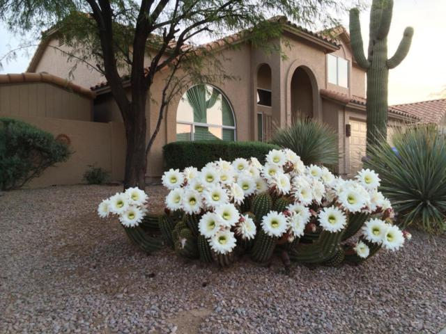 4108 E Palo Brea Lane, Cave Creek, AZ 85331 (MLS #5720552) :: The Everest Team at My Home Group