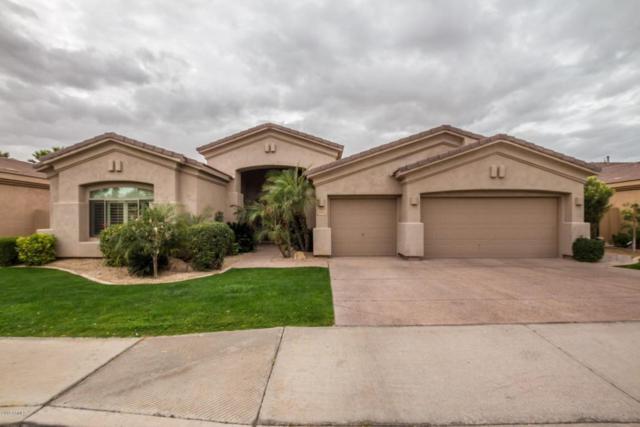 4556 S Jojoba Way, Chandler, AZ 85248 (MLS #5722982) :: Revelation Real Estate