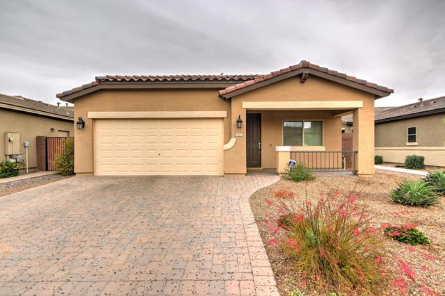 1412 W Dove Tree Avenue, Queen Creek, AZ 85140 (MLS #5723964) :: Occasio Realty