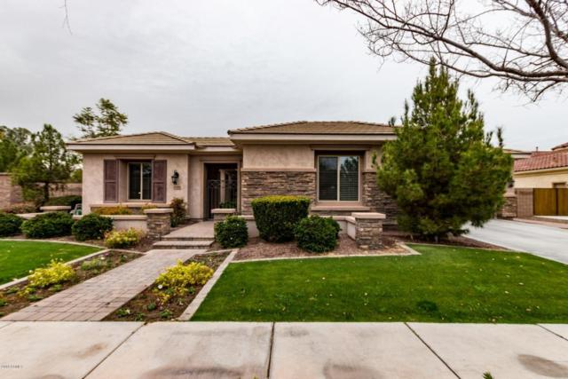 698 W Coconino Place, Chandler, AZ 85248 (MLS #5725052) :: The Everest Team at My Home Group