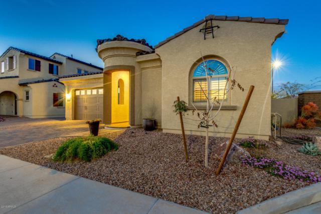 2932 E Ebony Drive, Chandler, AZ 85286 (MLS #5727128) :: Kelly Cook Real Estate Group