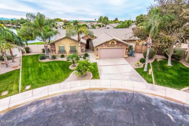 1362 W Lynx Way, Chandler, AZ 85248 (MLS #5727192) :: Kelly Cook Real Estate Group