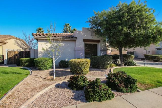 1352 E Geronimo Street, Chandler, AZ 85225 (MLS #5728124) :: Lux Home Group at  Keller Williams Realty Phoenix