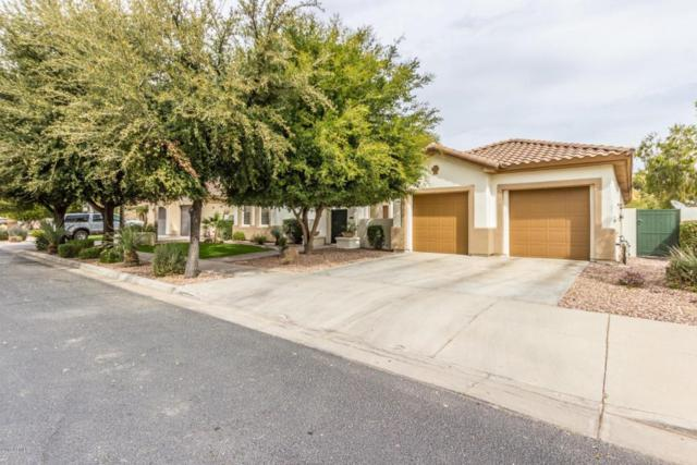 744 W Juniper Lane, Litchfield Park, AZ 85340 (MLS #5733881) :: Occasio Realty