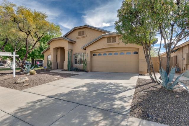 6667 W Oraibi Drive, Glendale, AZ 85308 (MLS #5734026) :: Sibbach Team - Realty One Group