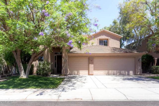 3851 S Barberry Place, Chandler, AZ 85248 (MLS #5737674) :: Revelation Real Estate
