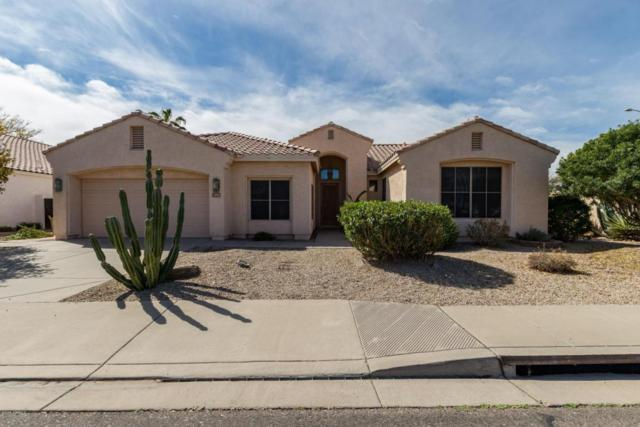 1793 W Lark Drive, Chandler, AZ 85286 (MLS #5740320) :: Group 46:10