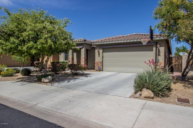 9174 W Hedge Hog Place, Peoria, AZ 85383 (MLS #5746730) :: Keller Williams Realty Phoenix