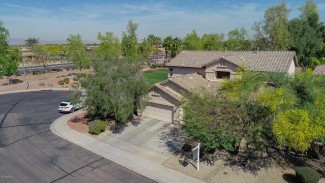 13010 W Flower Street, Avondale, AZ 85392 (MLS #5746753) :: Occasio Realty