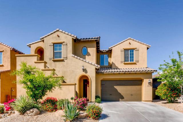 3774 E Ringtail Way, Phoenix, AZ 85050 (MLS #5748128) :: My Home Group