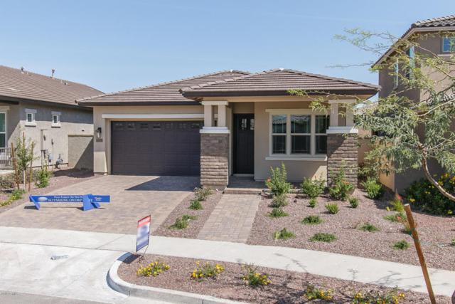 20628 W Nelson Place, Buckeye, AZ 85396 (MLS #5749128) :: Occasio Realty