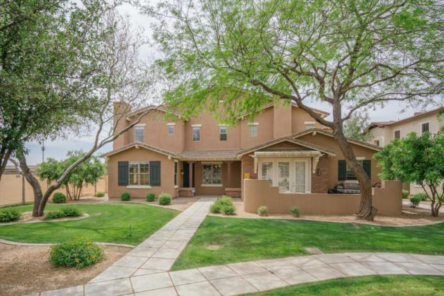 13339 N 151ST Drive, Surprise, AZ 85379 (MLS #5750553) :: Occasio Realty