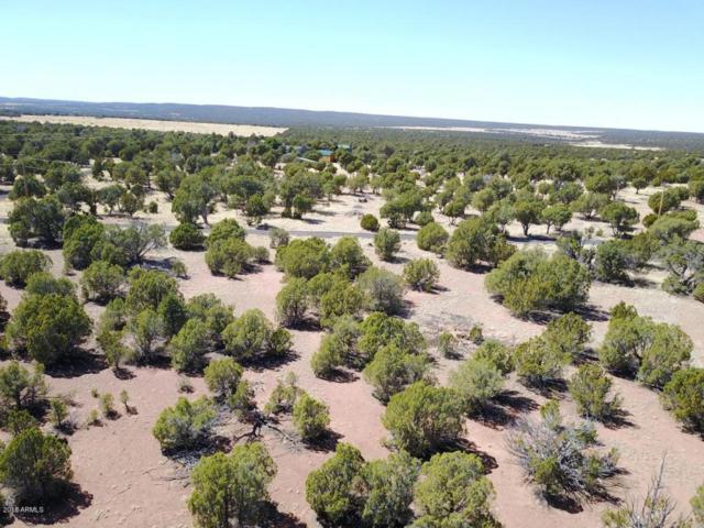 TBD Elk Trail Road, Clay Springs, AZ 85923 (MLS #5752032) :: Occasio Realty